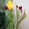 3002_1002764612_avatar