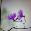 3002_1530118233_avatar