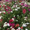 3002_1402715964_avatar
