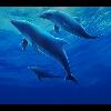 3002_1510870985_avatar