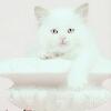 3002_1406069172_avatar