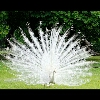 3002_1518193050_avatar