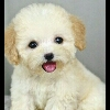 3002_1523649434 large avatar