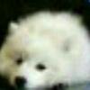 3002_1003019814_avatar