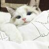3002_1520157871_avatar
