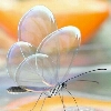 3002_1505804612_avatar