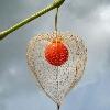3002_1505596343_avatar