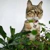 3002_1534843085_avatar
