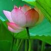3002_1527637337_avatar