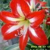 3002_1102596568_avatar