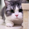 3002_1520707079_avatar