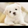 3002_1524554181_avatar