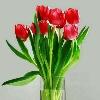3002_1107029503_avatar