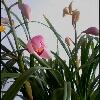 3002_1503813269_avatar