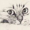3002_1515666413_avatar