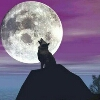 3002_1522409555_avatar