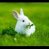 3002_1529086456_avatar