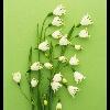 3002_1530115781_avatar