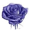 3002_1519954932_avatar