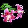 3002_1529290548_avatar