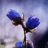 3002_1523754195_avatar