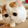 3002_1524978066_avatar