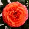 3002_1401042583_avatar