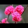 3002_1106495472_avatar