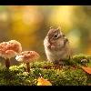 3002_1507932978_avatar