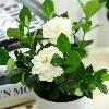 3002_1518186180_avatar