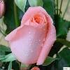 3002_1002984814_avatar