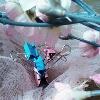 3002_1508509118_avatar