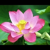 3002_1537322374_avatar