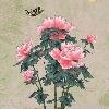 3002_1524999697_avatar
