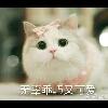 3002_1529997612_avatar
